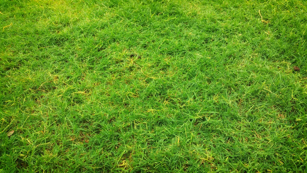 Artificial turf Sydney product